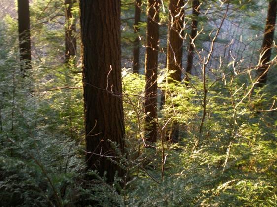 mindsalvage-com-cavendish-woods
